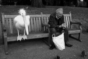 Old Man and Bird